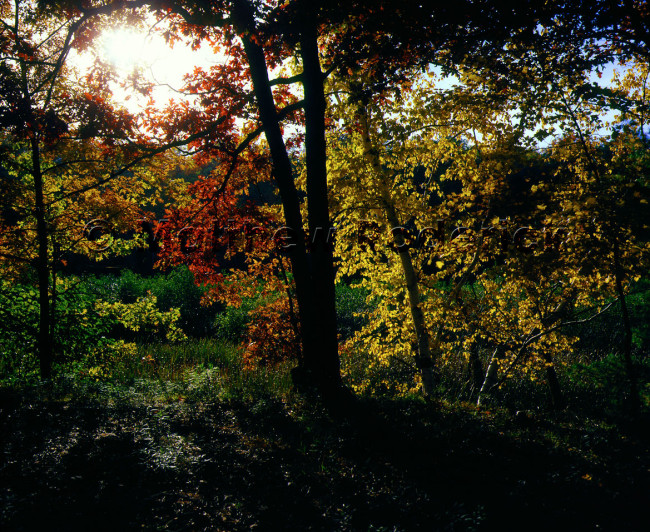 paradise-photography-fuji-velvia-slide-film-daydream-illuminations