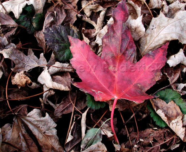 paradise-photography-landscape-fine-art-digital-camera-red-leaf