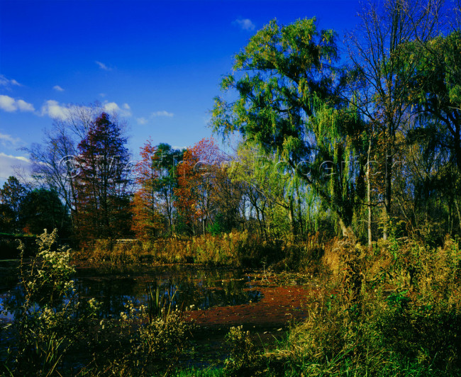 paradise-photography-wisner-kodachrome-e100s-fine-art-weeping-for-the-sun