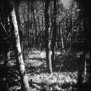 medium format, 120mm, holga, black and white, negative, tmax, roll film, photography, print, process