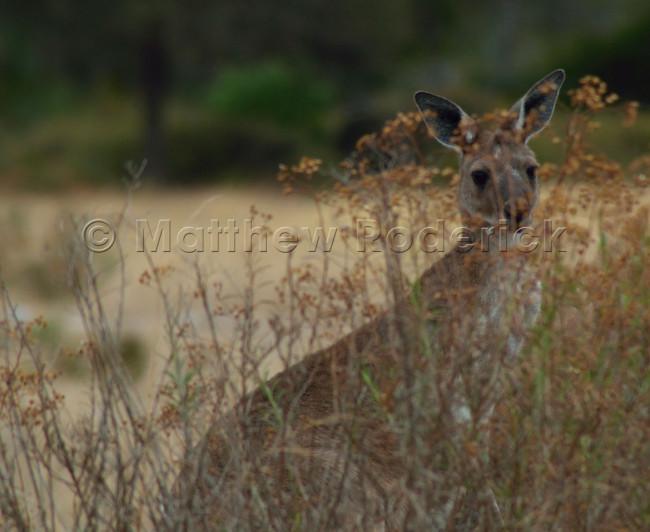 kangaroos-and-koalas-06